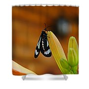 Butterfly An3606-13 Shower Curtain