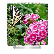 Butterfly And Sweet Williams Shower Curtain