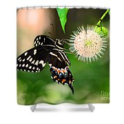 Butterfllies And The Crystal Balls Shower Curtain