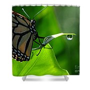 Butterfly And Water Shower Curtain
