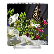 Swallowtail Butterfly On White Petunia Flower Shower Curtain