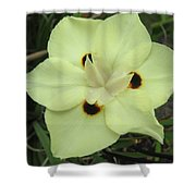 Butterfly Anthers Shower Curtain