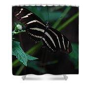 Butterfly Art 2 Shower Curtain
