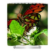 Butterfly Art Shower Curtain