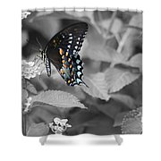 Butterfly Art Wings Together Shower Curtain