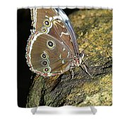 Butterfly At Night Shower Curtain