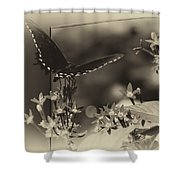 Butterfly Black 06 In Heirloom Finish Shower Curtain