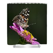 Butterfly Blossom Shower Curtain by Christina Rollo