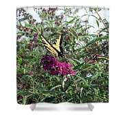 Butterfly Bush Shower Curtain