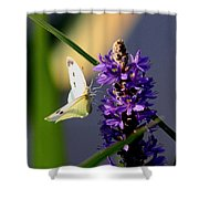 Butterfly - Cabbage White Shower Curtain
