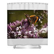 Butterfly Close Up Shower Curtain