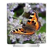 10088 Small Tortoiseshell Butterfly Shower Curtain