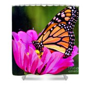 Butterfly Cup Shower Curtain