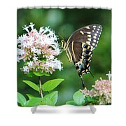 Butterfly Dining  Shower Curtain