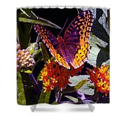 Butterfly Don't Fly Away Shower Curtain
