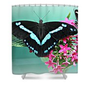Butterfly Duo Shower Curtain