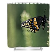 Butterfly E. Black Swallowtail Shower Curtain