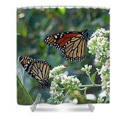 Butterfly Garden - Monarchs 01 Shower Curtain