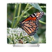 Butterfly Garden - Monarchs 07 Shower Curtain