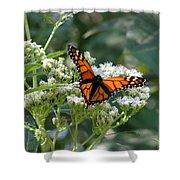 Butterfly Garden - Monarchs 09 Shower Curtain