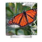 Butterfly Garden - Monarchs 10 Shower Curtain