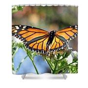 Butterfly Garden - Monarchs 13 Shower Curtain