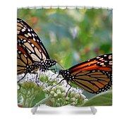 Butterfly Garden - Monarchs 17 Shower Curtain