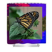 Butterfly Gold Photograph Insect Taken At Costa Rica Travel Vacation Unique Digital Painted Border B Shower Curtain