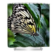 Butterfly - Green Leaf Shower Curtain