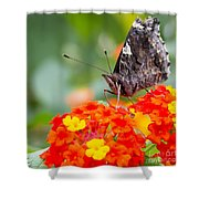 Butterfly Hanging Out On Wildflowers Shower Curtain