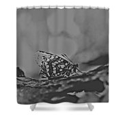 Butterfly In Black And White Shower Curtain