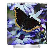 Butterfly In Blue Shower Curtain