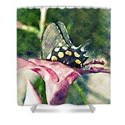 Butterfly In Flower Shower Curtain
