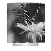 Butterfly In Motion #1952bw Shower Curtain