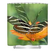 Butterfly In Motion #1967 Shower Curtain