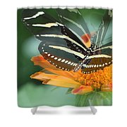 Butterfly In Motion #1968 Shower Curtain