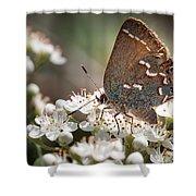 Butterfly In The Garden Shower Curtain