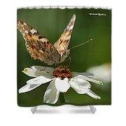 Butterfly Macro Photography Shower Curtain by Stwayne Keubrick