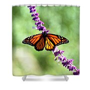 Butterfly - Monarch Shower Curtain