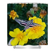 Butterfly Moth Shower Curtain