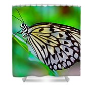Butterfly On A Leaf Shower Curtain