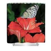 Butterfly On A Lily Shower Curtain