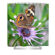Butterfly On African Daisy Shower Curtain