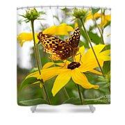 Butterfly On Blackeyed Susan Shower Curtain