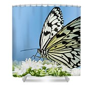 Butterfly On Blue Shower Curtain
