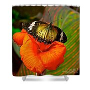 Butterfly On Canna Flower Shower Curtain