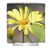 Butterfly On Daisy Shower Curtain