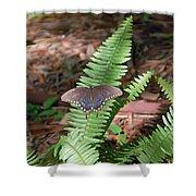 Butterfly On Fern Shower Curtain