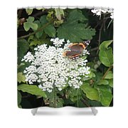 Butterfly On Lace Shower Curtain