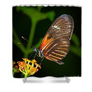 Butterfly On Orange Bloom Shower Curtain